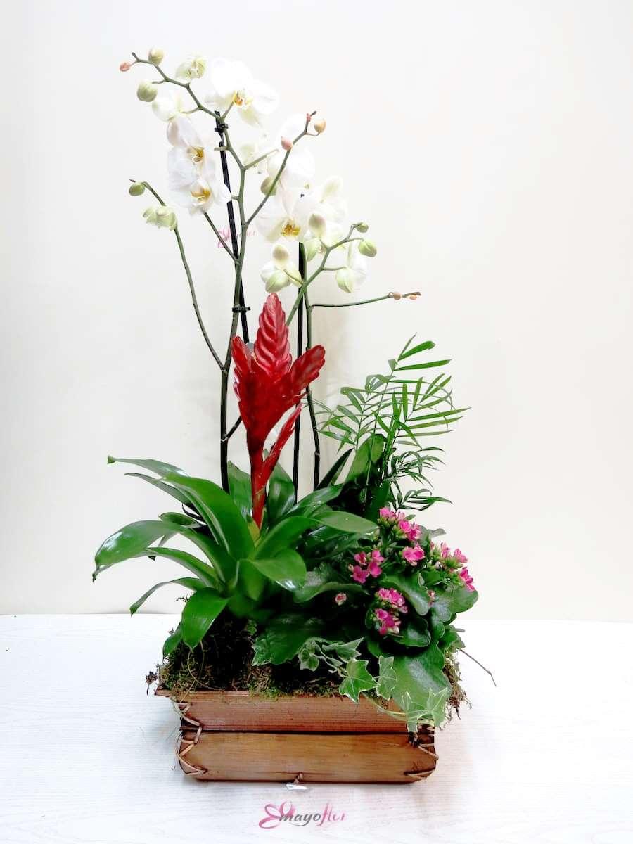 Centro de plantas con Orquídea - Foto 3