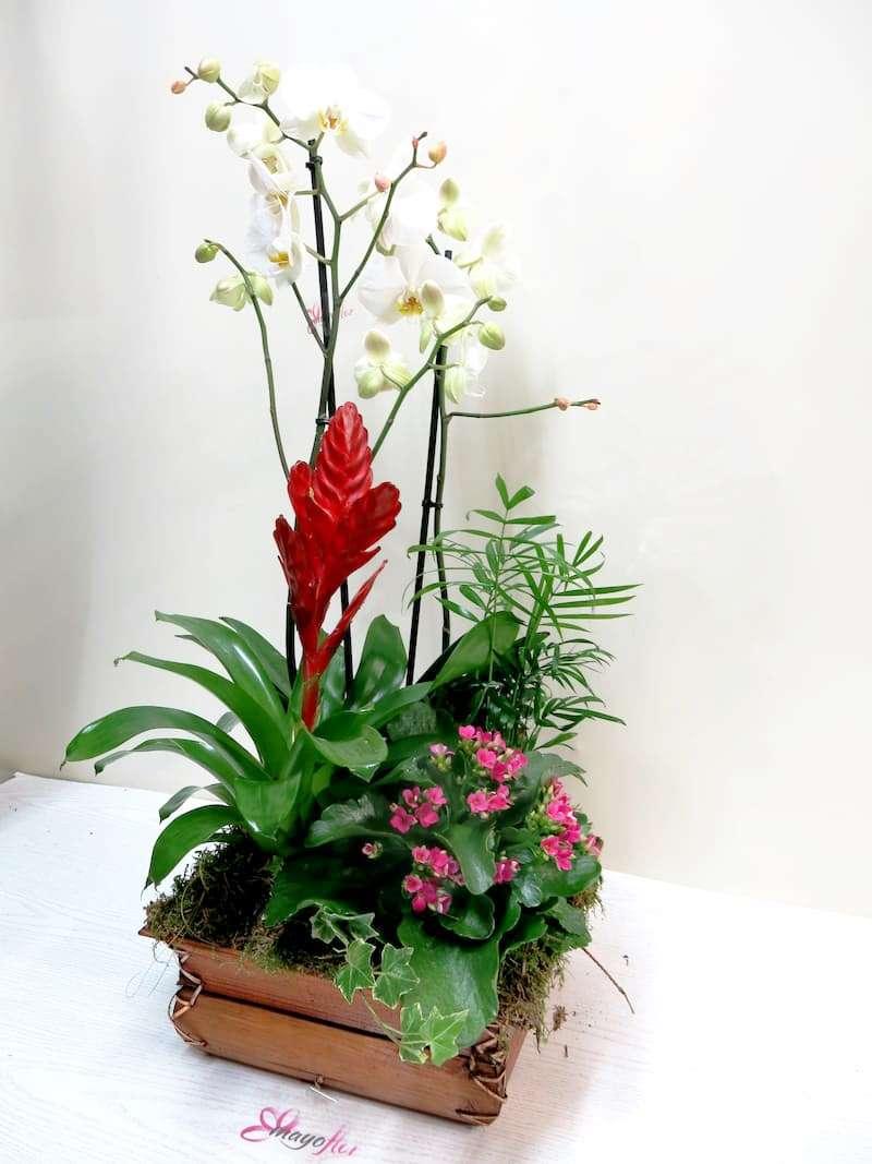 Centro de plantas con Orquídea - Foto 4
