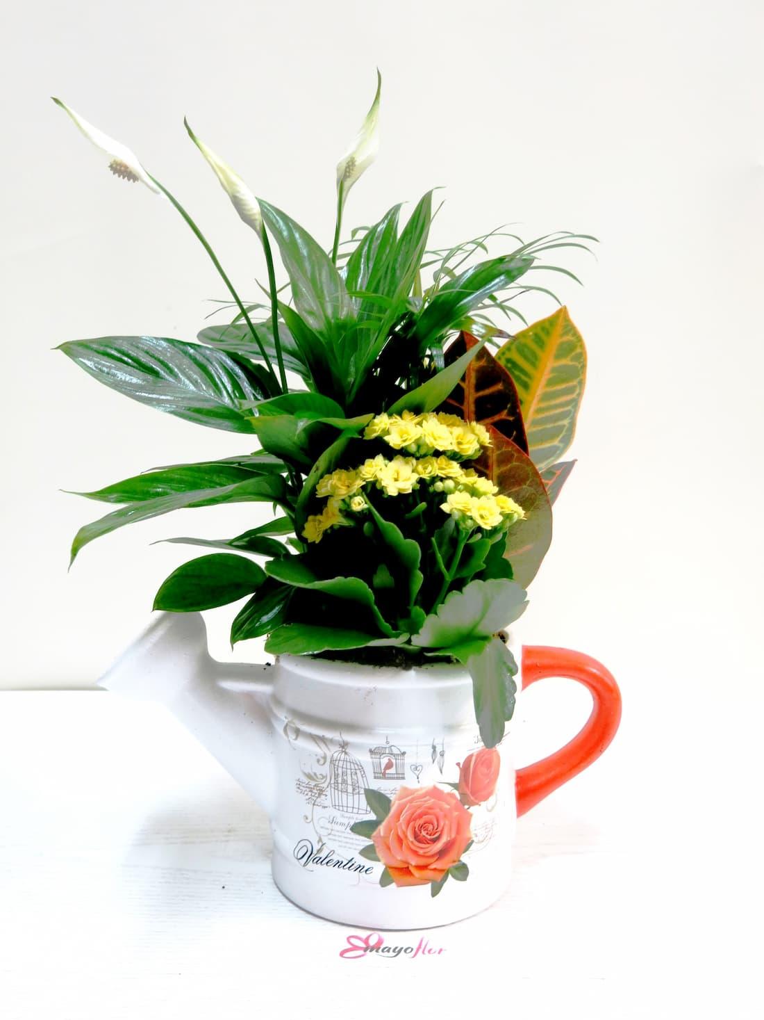Plantas en Regadera de Cerámica - Foto 2
