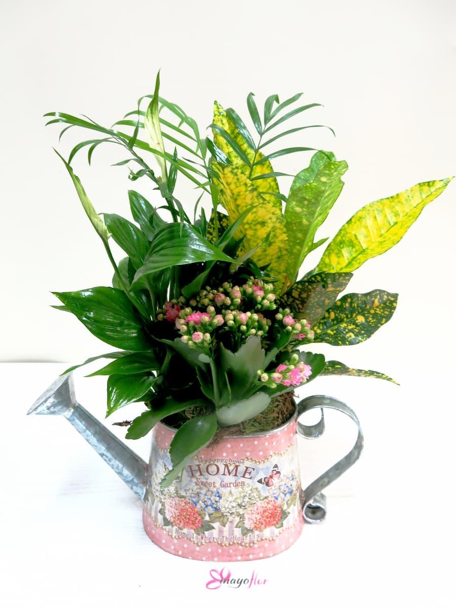 Conjunto de plantas naturales en regadera de metal decorada - Foto 2