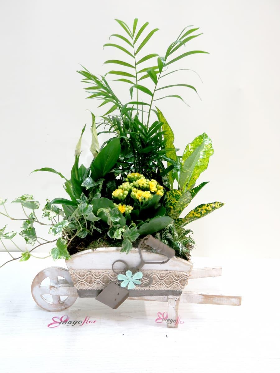 Carretilla cargada  de Plantas - Foto 2