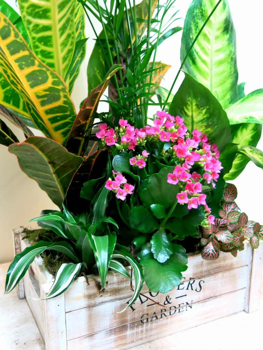 Box with natural plants Flower & Garden - Foto 3