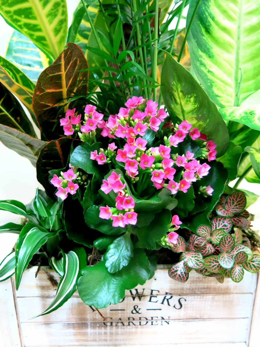 Box with natural plants Flower & Garden - Foto 2