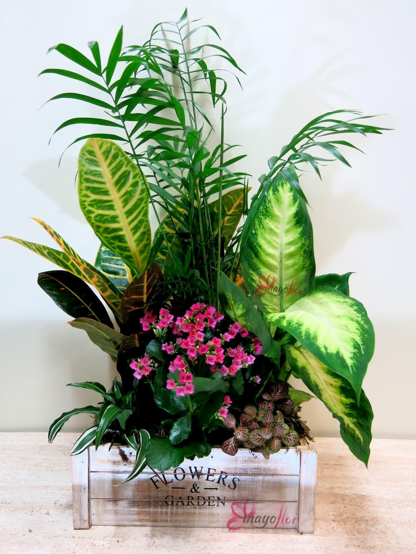 Caja con plantas naturales Flower & Garden - Foto principal