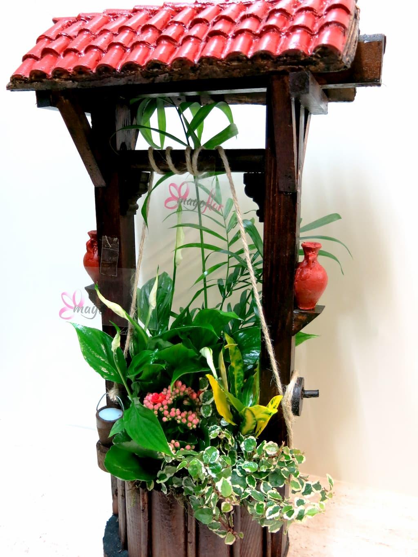 Plantas naturales en Pozo - Foto 4