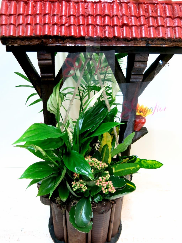 Plantas naturales en Pozo - Foto 3