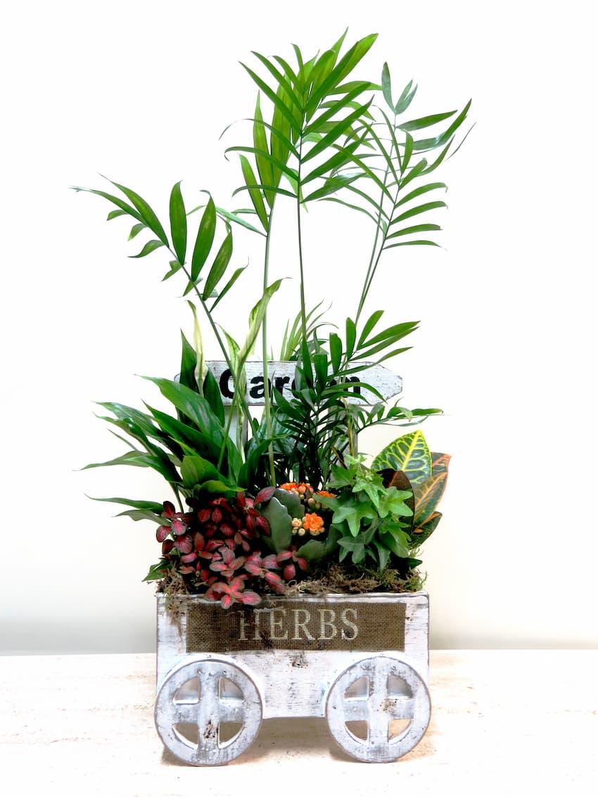 El Carrito de Plantas - Foto principal