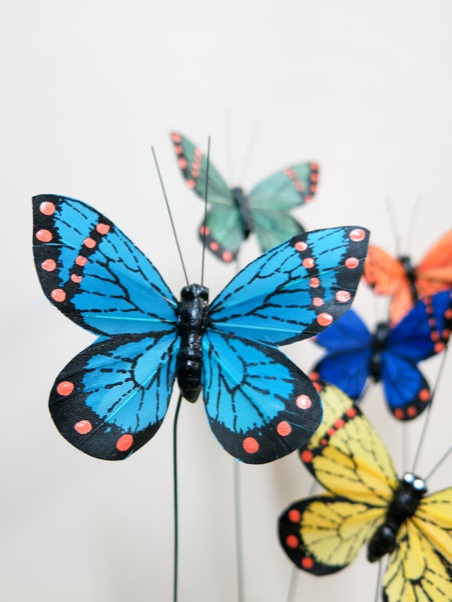 Mariposas - Foto principal