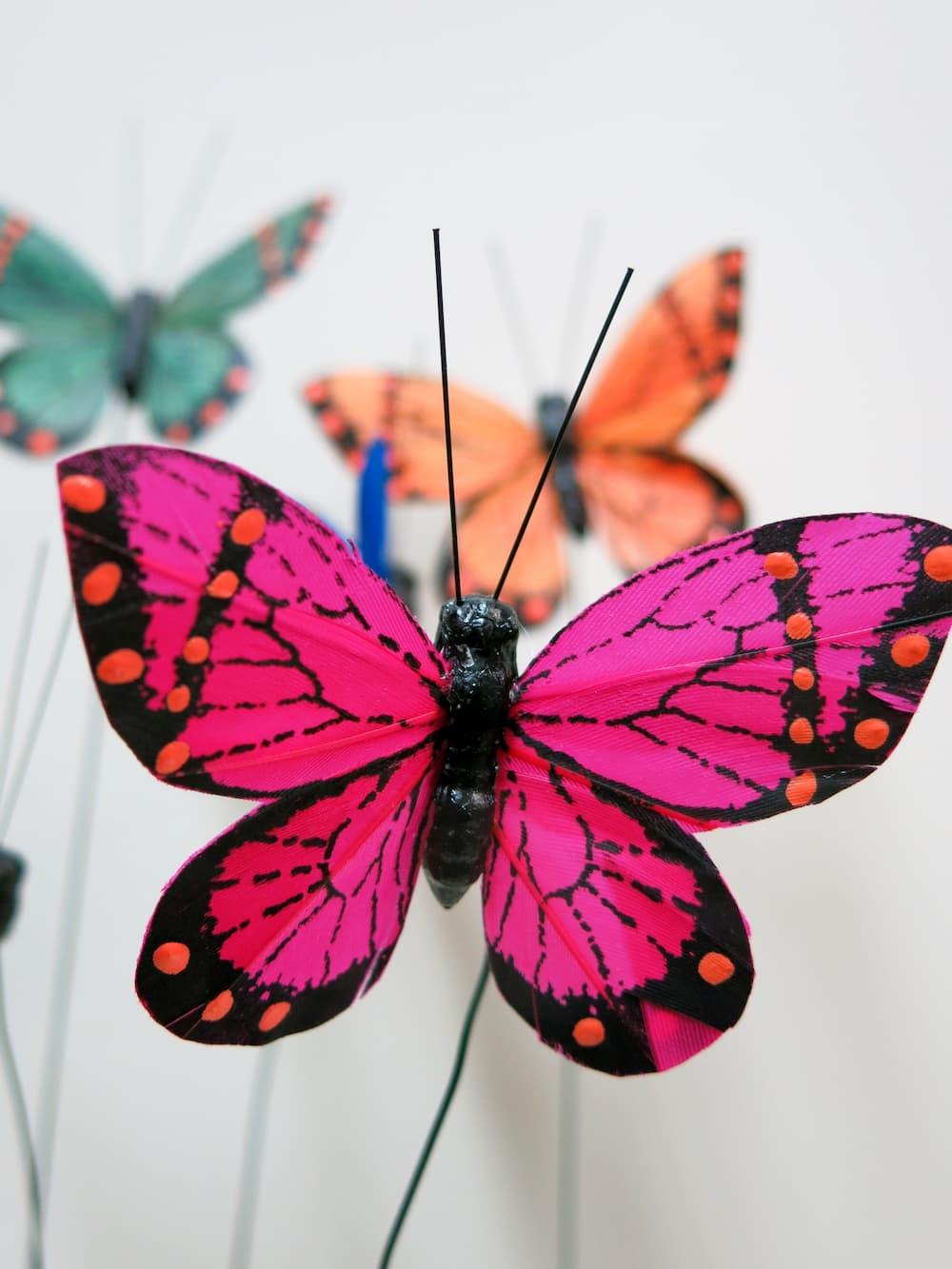 Mariposas - Foto 2