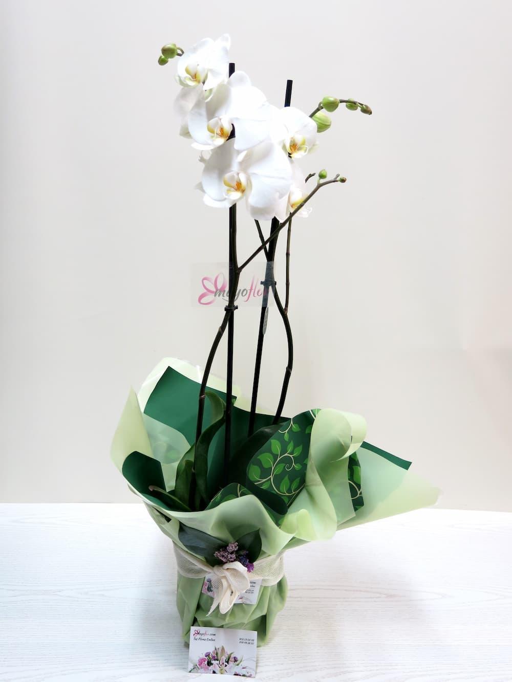 Orquídea Phalenopsis con Cerámica - Foto 2