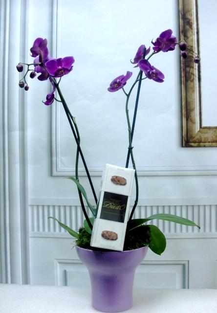 Orquídea Phalenopsis con trufas. Te Ahorro de 2? de color malva