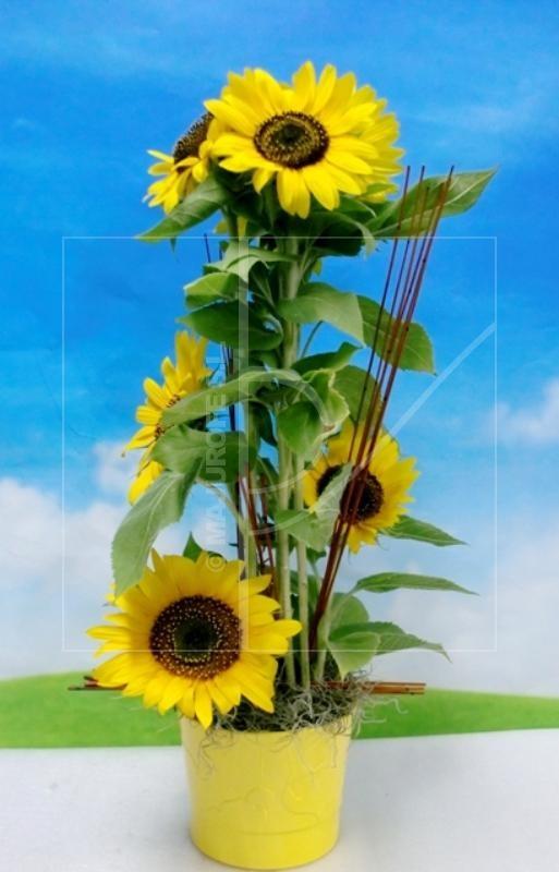 Sunflowers in centerpiece - Foto principal