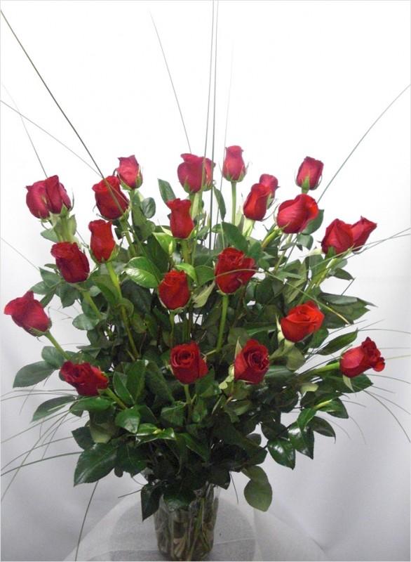 24 Rosas Rojas Tallo largo de color rojas