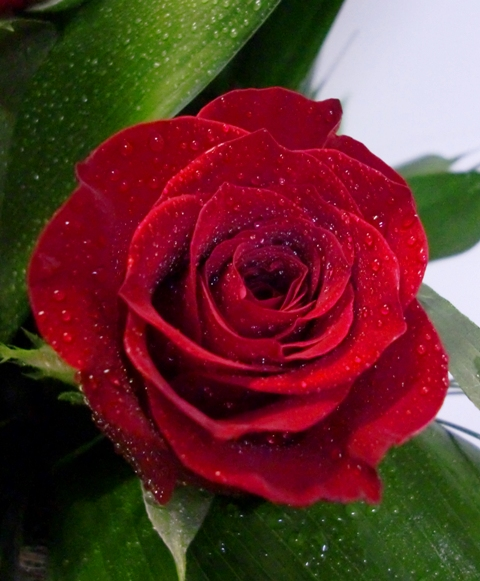2 Rosas en centro de cristal de color rojas