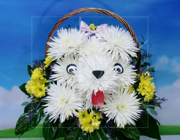 Natural dog Flowers in basket - Foto principal