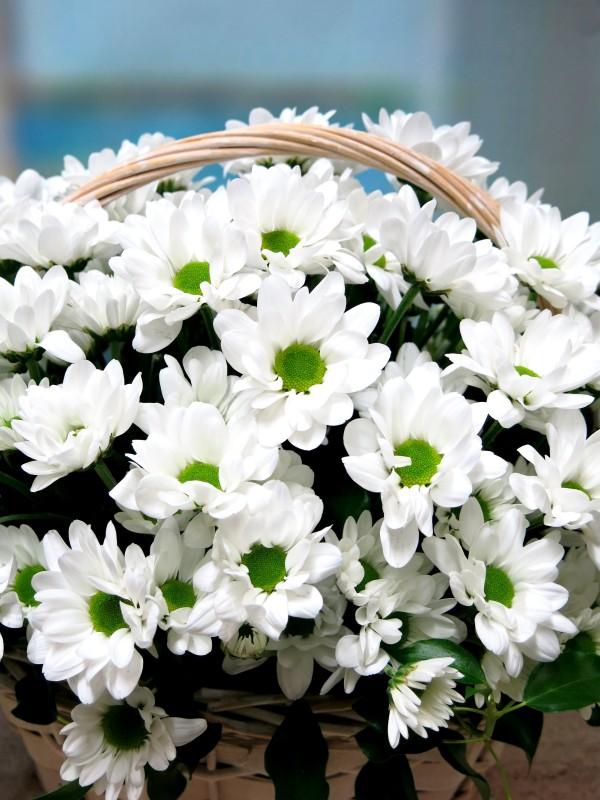 White daisies in basket - Foto 3