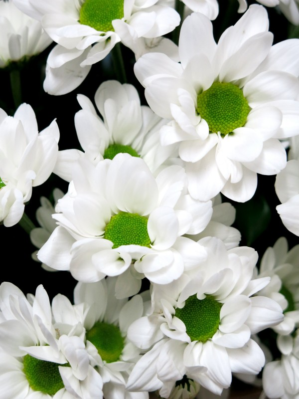 White daisies in basket - Foto 4