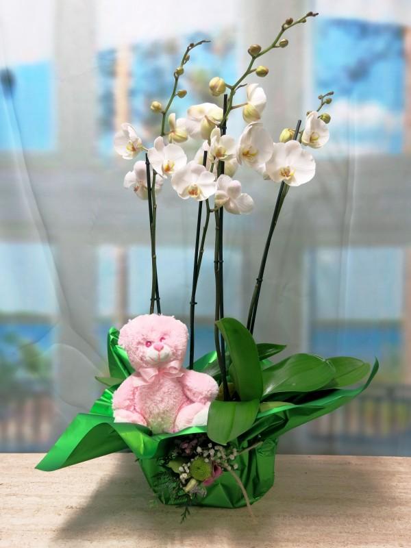 2 Orquideas Phalenopsis con peluche - Foto principal