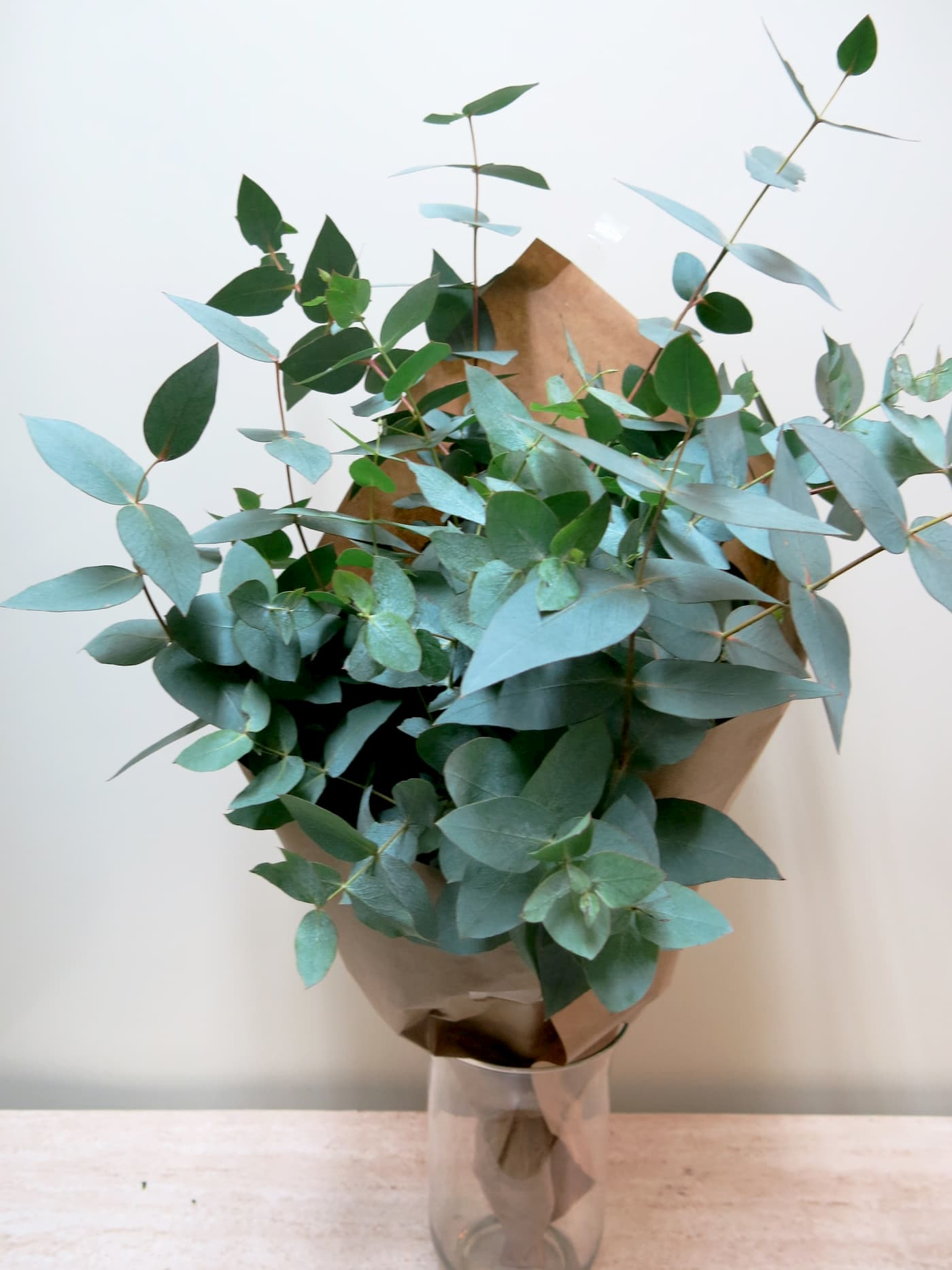 eucalyptus for your natural flowers - Foto principal