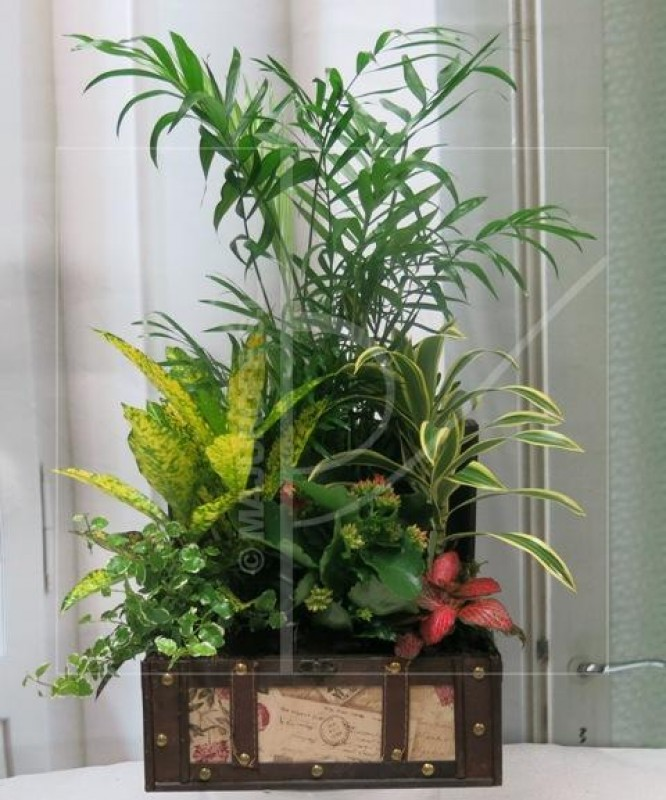 Case with Natural Plants - Foto principal