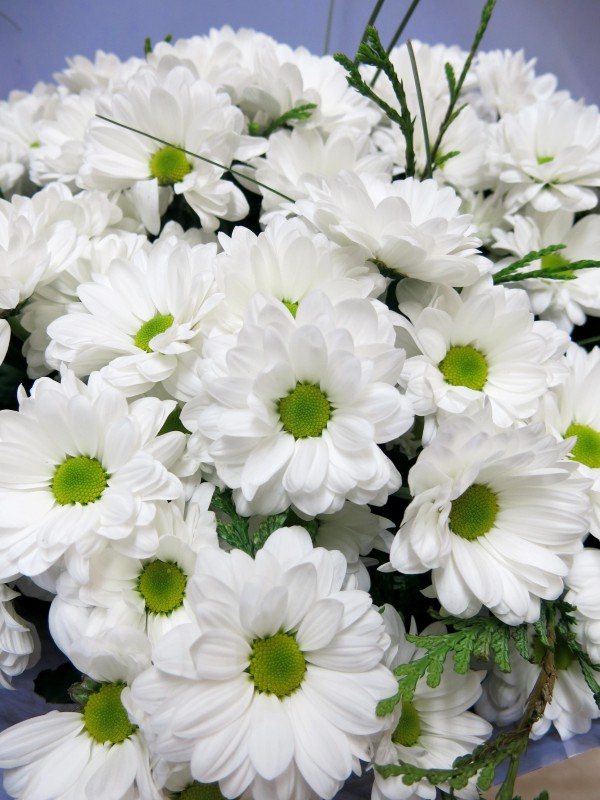 Bouquet of 15 stems of White Daisies - Foto 3