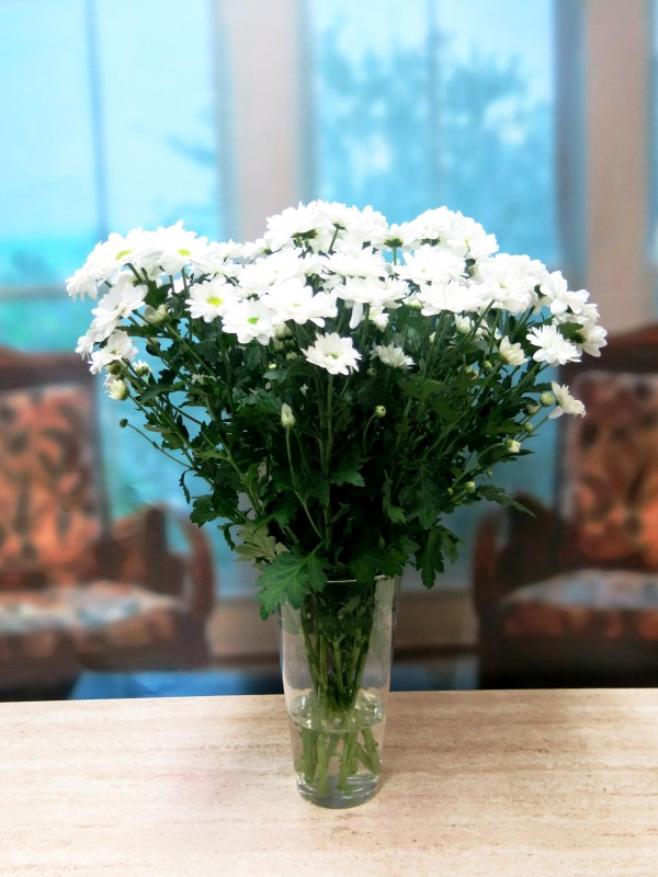GIFTS White daisies 10 stems - Foto 3