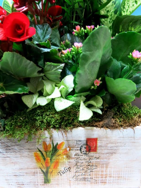 Centro de plantas en Caja - Foto 4