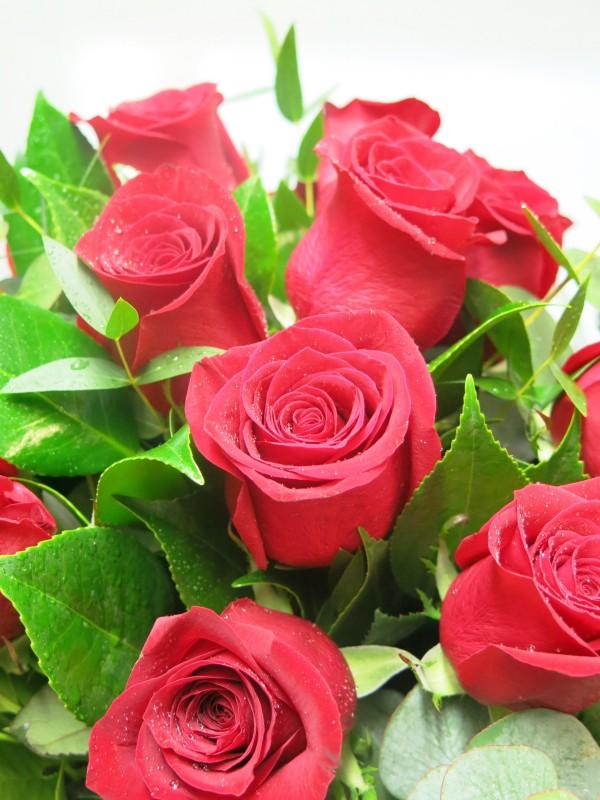Blouquet de 12 Rosas (tallo de 50-60 cm.) - Foto 4