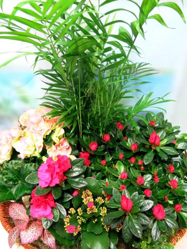 Panera de plantas con flor - Foto 3