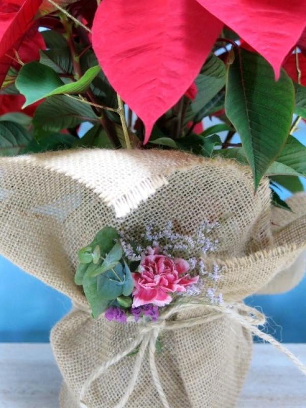 Flor de pascua envuelta en arpillera - Foto 3