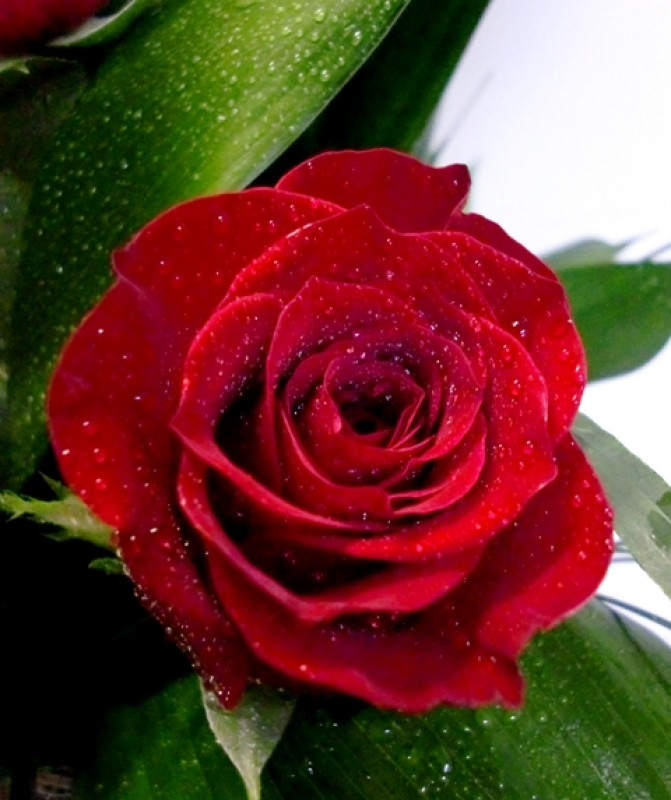 Centro de 30 Rosas en cristal de color rojas