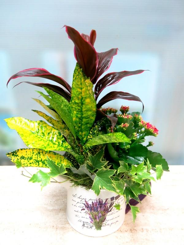 Conjunto de Plantas en Tetera - Foto 2