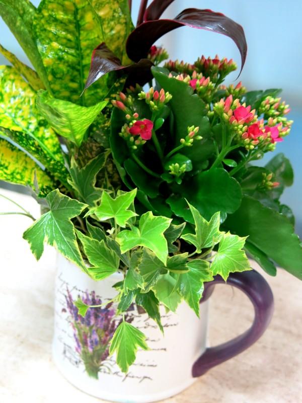 Conjunto de Plantas en Tetera - Foto 3