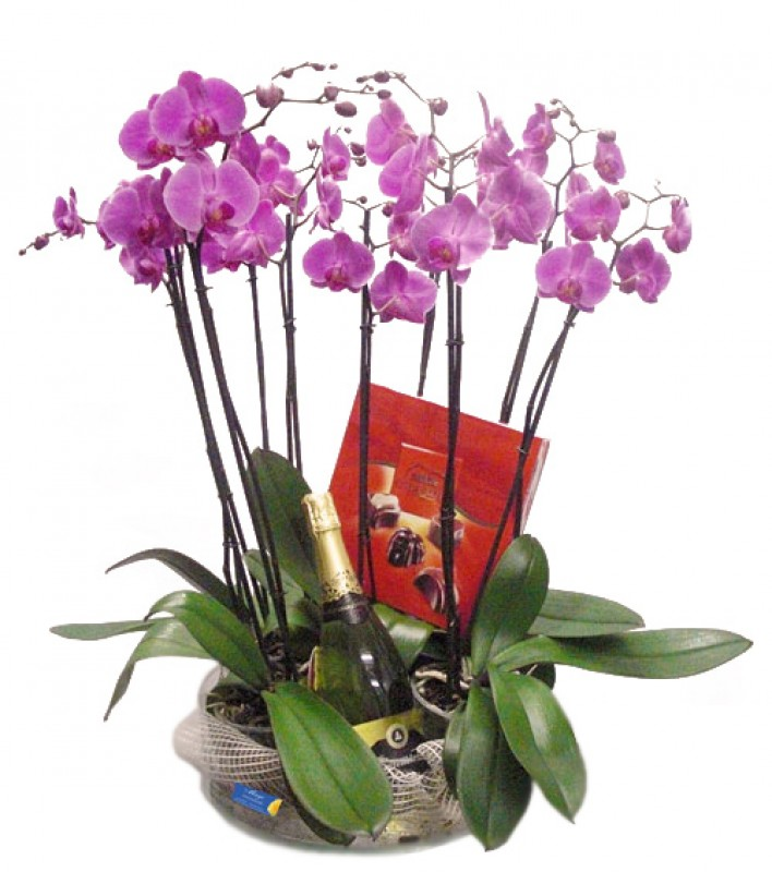Phalenopsis with chocolates and champagne - Foto principal