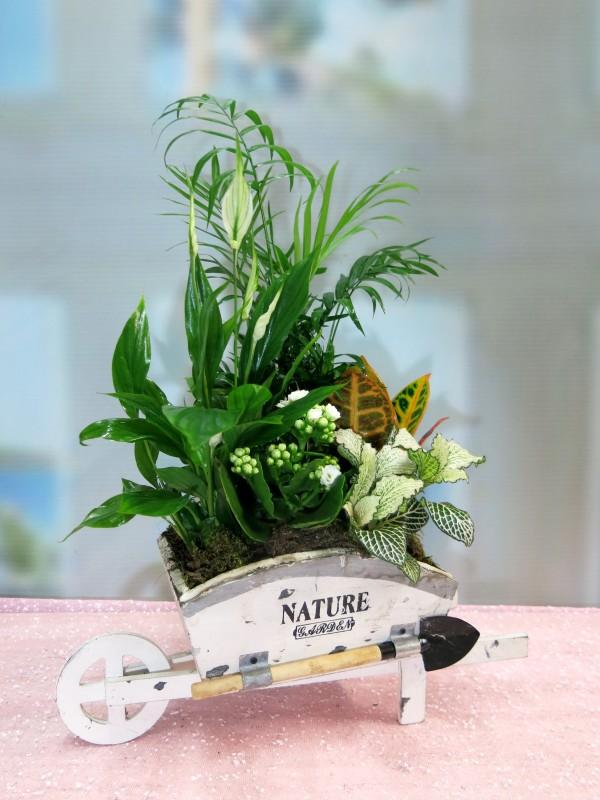 Plant loaded trolley - Foto 3