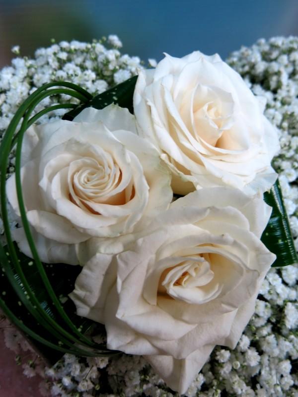 Corazón de Rosa y Paniculata - Foto 2