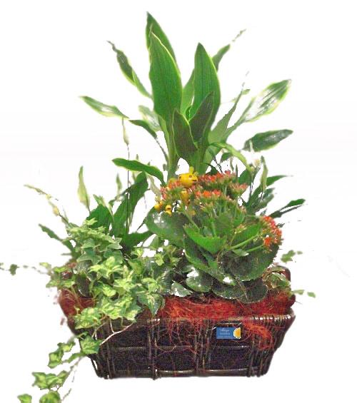Cesta de plantas variadas - Foto principal