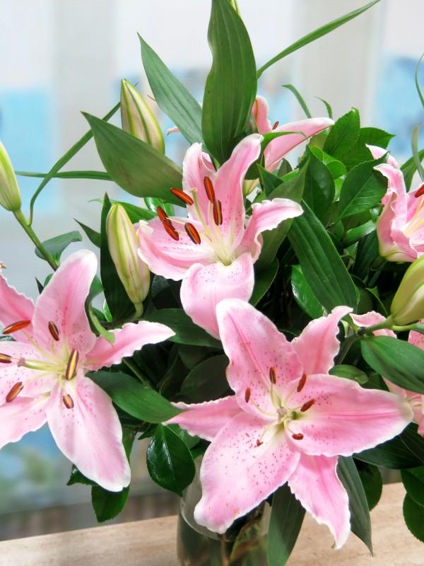 Lilium Oriental 5 tallos. rosa