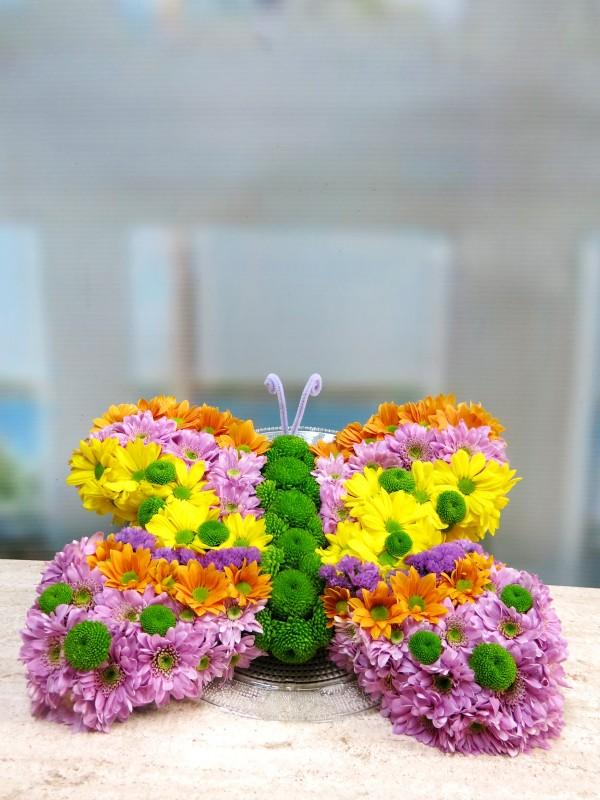 Lisa's Butterfly - Foto 2