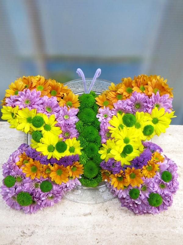 Lisa's Butterfly - Foto principal
