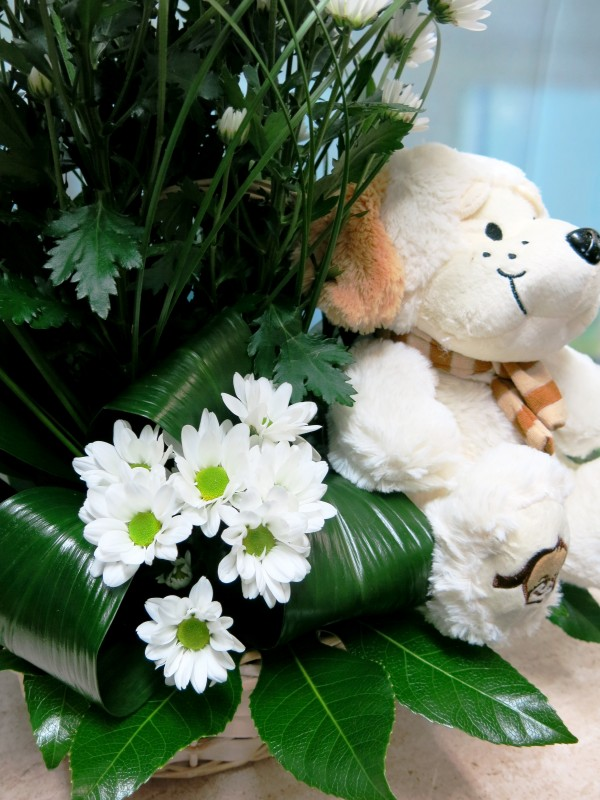 Daisies with toy in basket - Foto 4