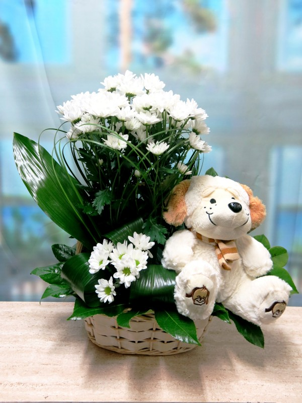 Daisies with toy in basket - Foto principal