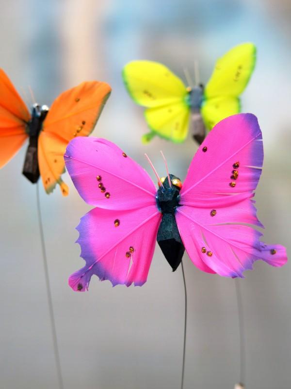 Butterflies - Foto 2