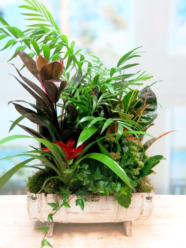 Plant Arrangement in White Case - Foto principal