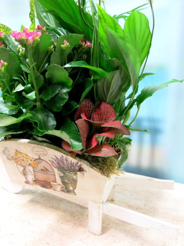 Carretilla cargada  de Plantas - Foto 4