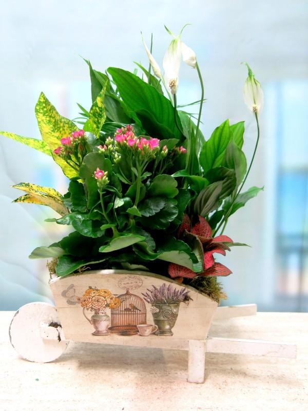 Carretilla cargada  de Plantas - Foto 5