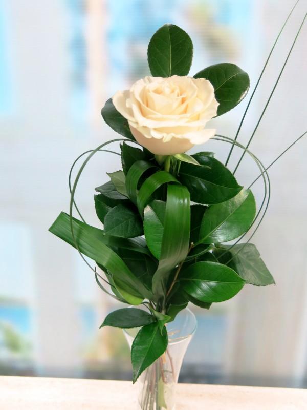 1 Rosa Blanca. Para regalar. - Foto principal