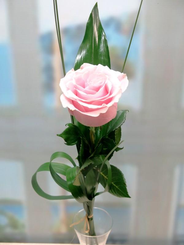 1 pink rose - Foto principal