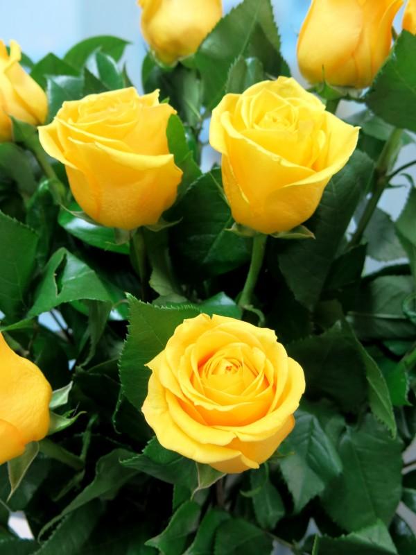 Bouquet de 12 Rosas amarillas - Foto 2
