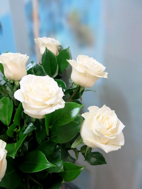 Bouquet of 12 white roses - Foto 2